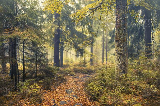 Herbstwald, Silberhaus, Trostau, Fichtelgebirge, Upper Franconia, Bavaria, Germany