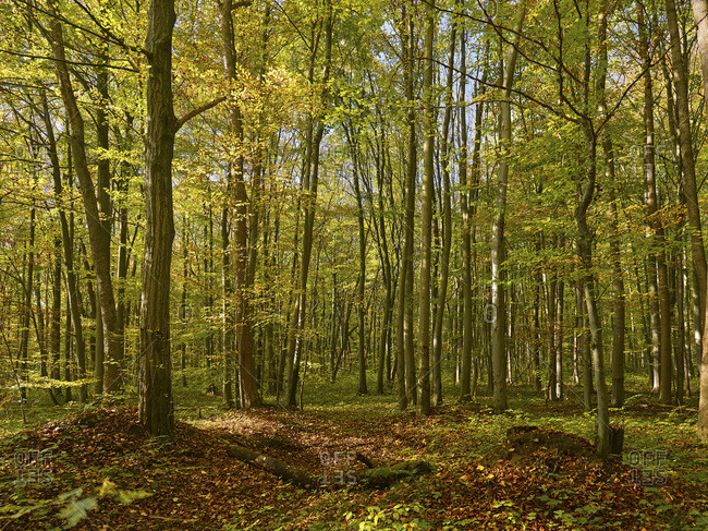 Autumn in the Hainich National Park, Thuringia, Germany
