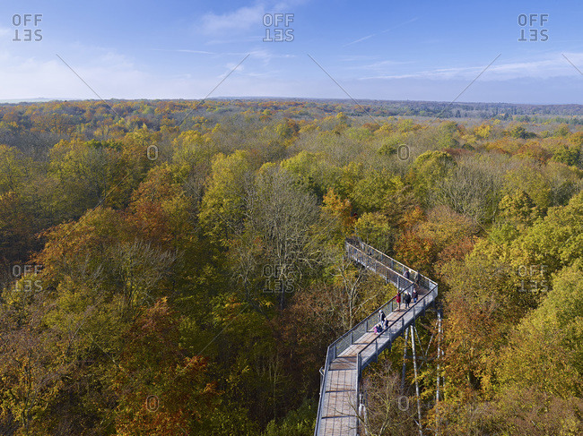 View over the Hainich from the treetop path in the National Park, Thuringia, Germany