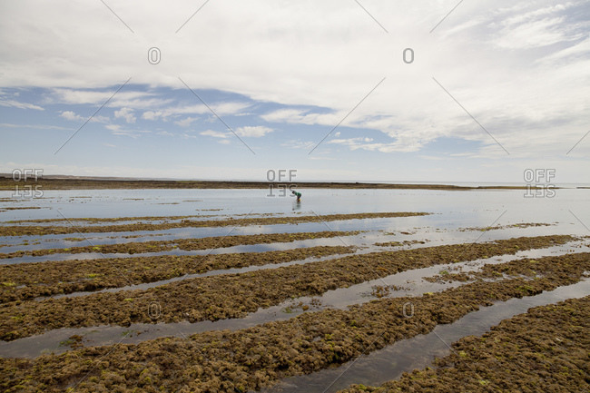 Crab fisherman, Peninsula Valdes, Patagonia, Argentina, South America