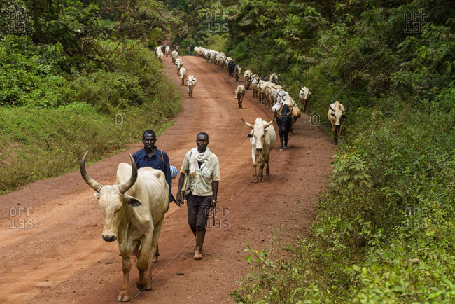 October 20, 2015: Fulani ranchers from the Central African Republic, Cameroon, Africa