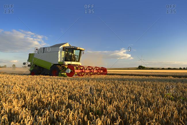 Grain harvest, combine harvester in wheat field, Saalekreis, Saxony-Anhalt, Germany