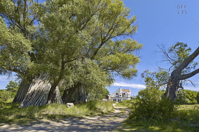 Trees near Warthe in Lieper Winkel on Usedom, Mecklenburg-Western Pomerania, Germany