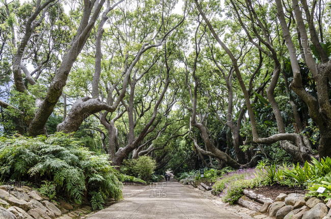 Botanical Garden, Cape Town, Western Cape, South Africa, Africa