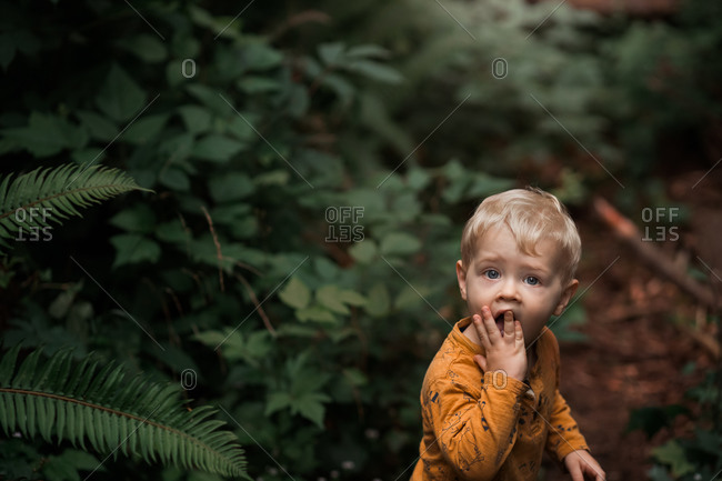Little boy picking berries and eating one