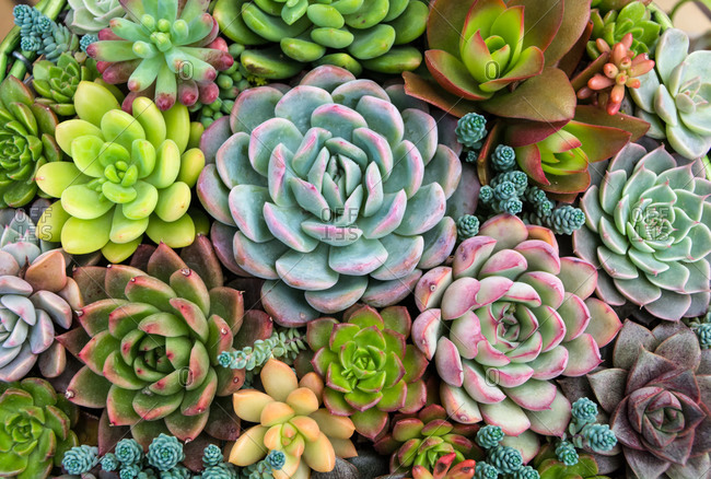 Variety of succulent plants, close up