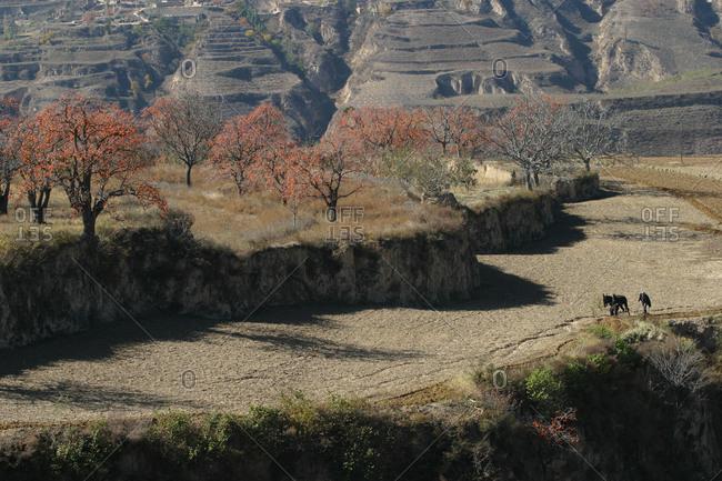 Village farmer farming in Goldberg, YiChuan county, Shaanxi province