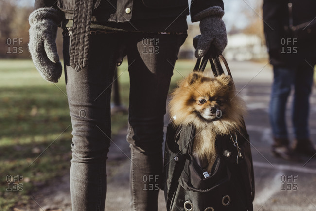 Midsection of woman carrying Pomeranian in pet carrier bag on footpath at park