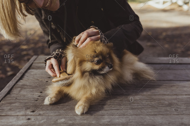 Midsection of woman brushing Pomeranian on wood at park