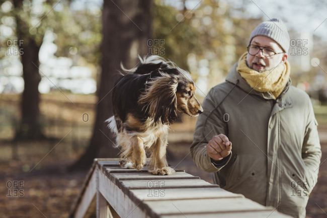 Man looking at dog walking on obstacle course during sunny day