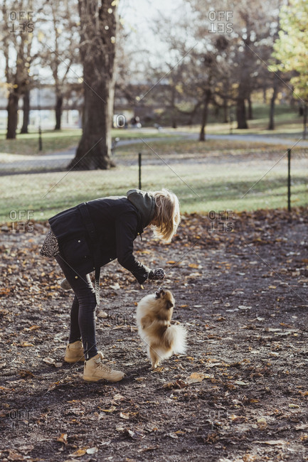 Full length side view of woman playing with Pomeranian at park