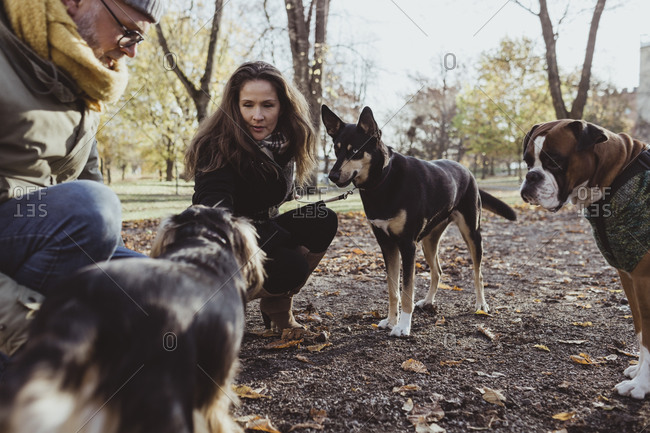 Man and woman crouching by dogs at park