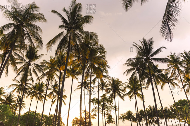 Palm trees, Sumbawa, Indonesia