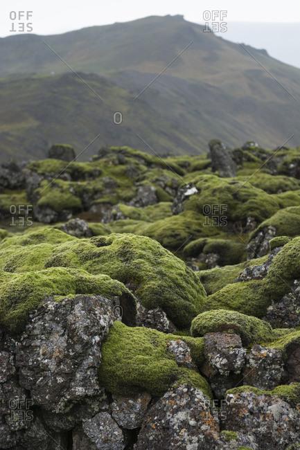 Moss covered lava plain, Iceland