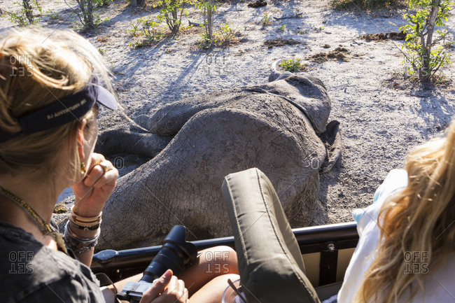 Two people in a jeep looking at a dead elephant carcass.
