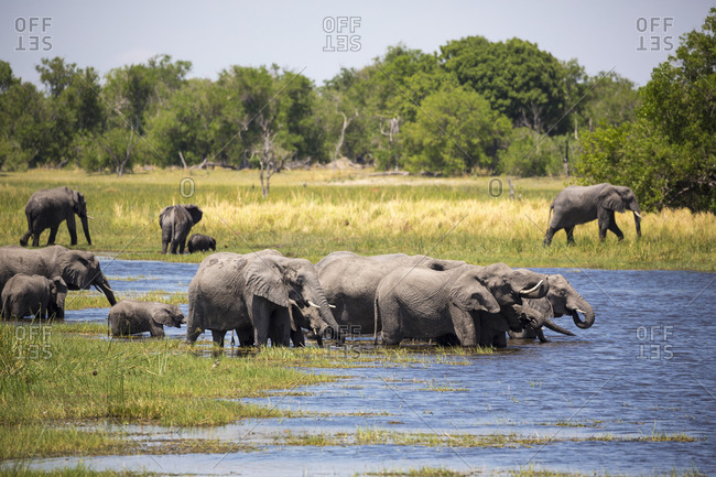 Herd of elephants gathering at water hole