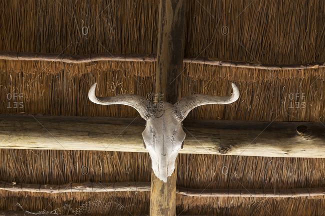 An animal skull with curved horns on a beam under a roof.