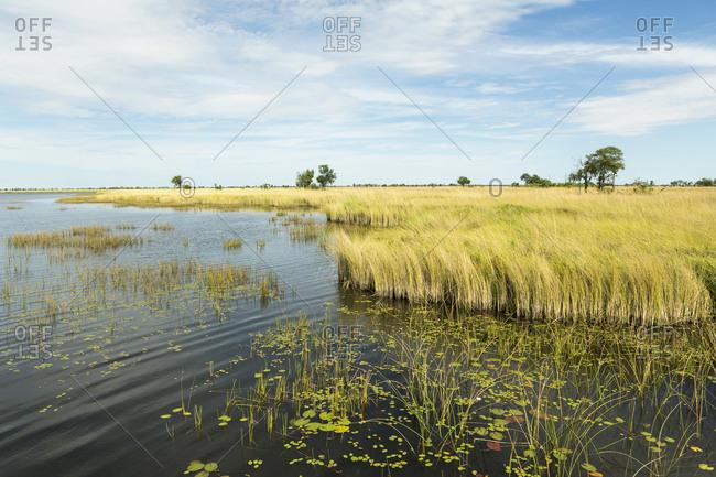 Reedbeds and waterways in the Okavango Delta, Botswana