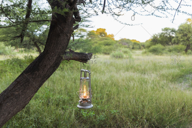 Lantern hanging on tree branch in a safari bush camp