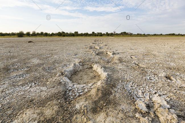 Elephant footprints at the salt pans of Nxai in Botswana