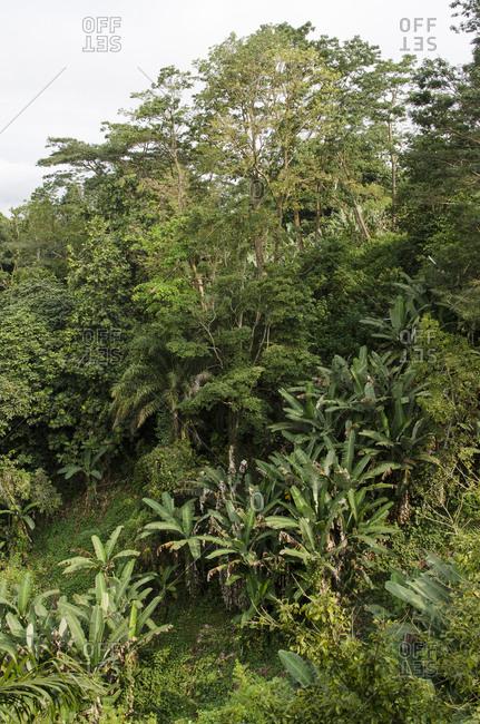 Lush forest on the island of Sao Tome, Sao Tome and Principe, Africa