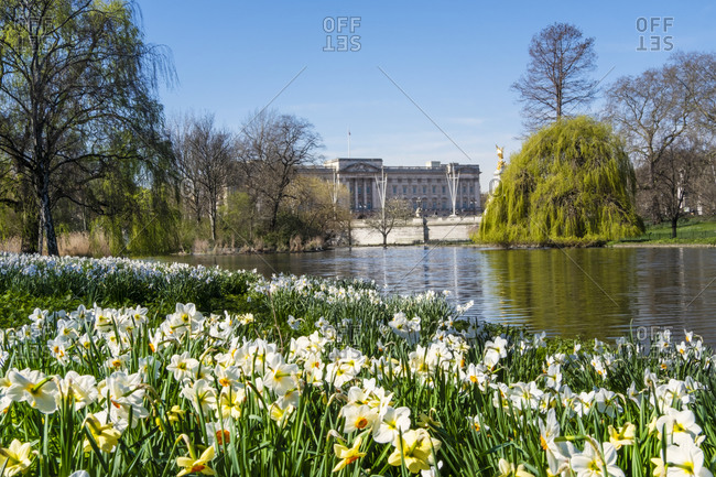 View of Buckingham Palace in springtime from St. James's Park, London, England, United Kingdom, Europe