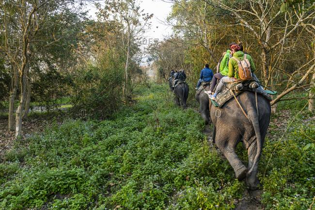 February 22, 2020: Early morning elephant ride on elephants through the elephant grass, Kaziranga National Park, UNESCO World Heritage Site, Assam, India, Asia
