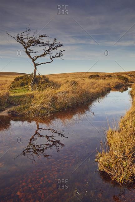 Marshland on the high rugged moors of Dartmoor National Park in evening sunlight, Gidleigh Common, near Chagford, Devon, England, United Kingdom, Europe