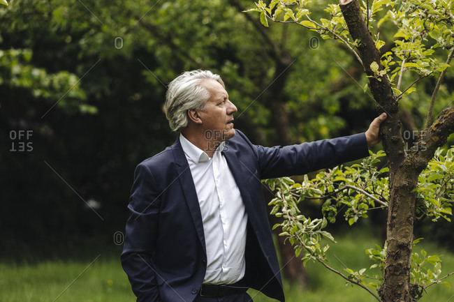 Senior businessman standing at a tree in a rural garden