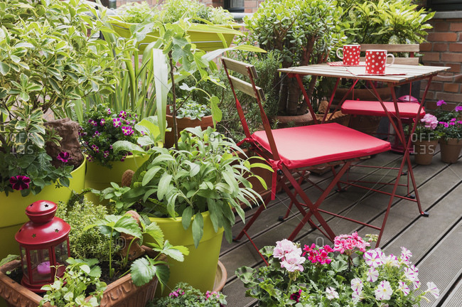 Balcony filled with large variety of potted herbs and flowers