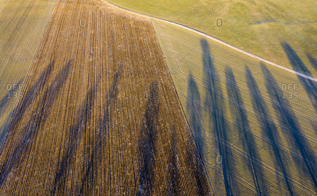 Germany- Bavaria- Dietramszell- Drone view of lime trees casting shadows on countryside field