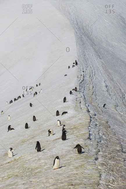 Penguin colony in Hope Bay
