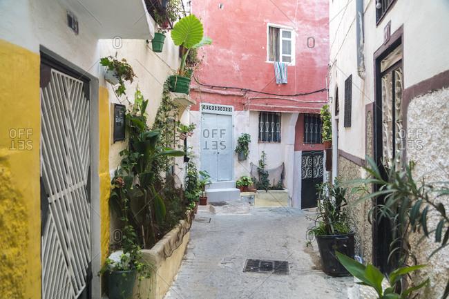 Morocco- Tanger-Tetouan-Al Hoceima- Tangier- Potted plants decorating alley in historic medina