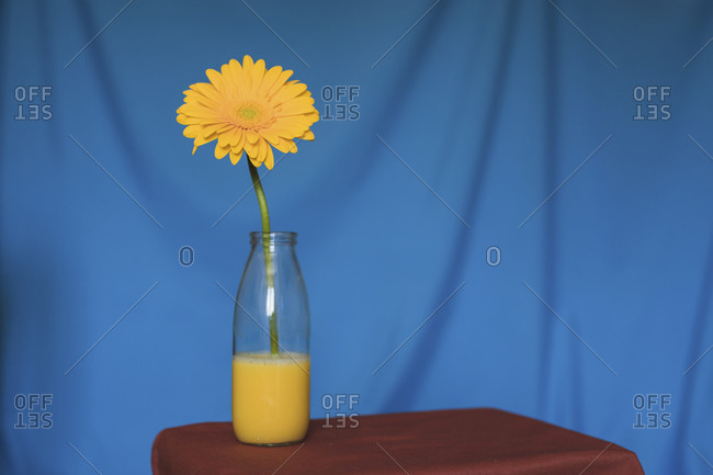 Studio shot of yellow flower blooming in glass bottle filled with yellow water