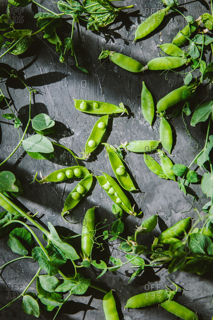 Snow pea pods on dark background in natural sunlight
