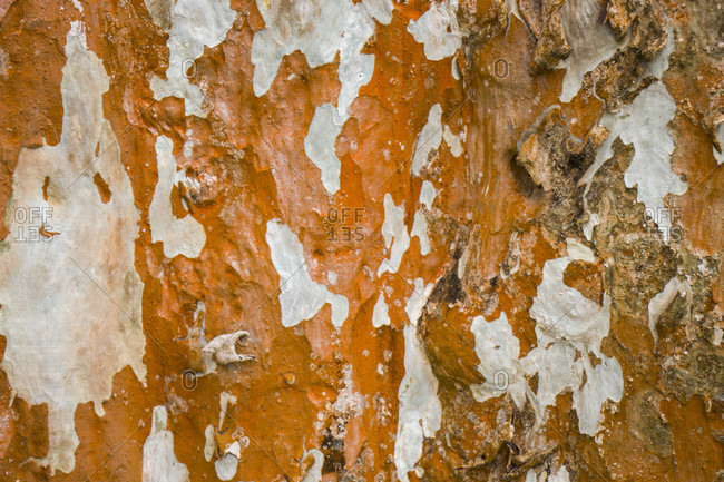 Full Frame Close Up of Dry and Cracked Tree Trunk Wood