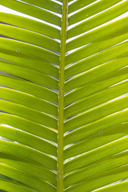 Full frame macro background showing the natural pattern and texture of a green leaf with its symmetrical vein structure