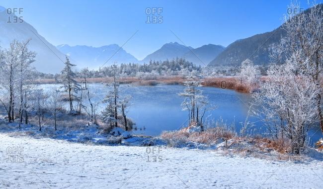 Winter landscape with hoarfrost in the moor area 'Sieben Quellen' against Zugspitzgruppe (2962m) and Kramerspitze (1985m), Eschenlohe, Loisachtal, Das Blaue Land, Upper Bavaria, Bavaria, Germany