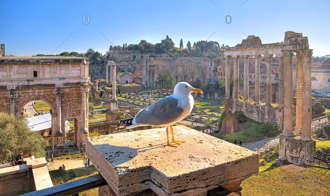 January 8, 2020: Seagull on balustrade over Roman Forum with Arch of Septimius-Severus, Rome, Lazio, central Italy, Italy