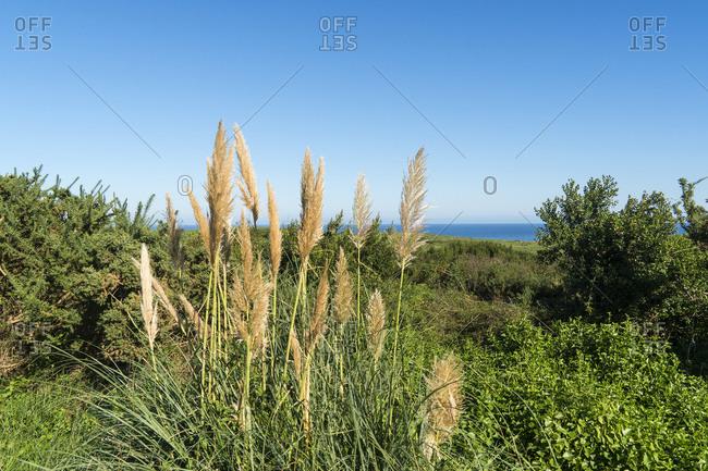 Spain, north coast, Cantabria, coastal landscape