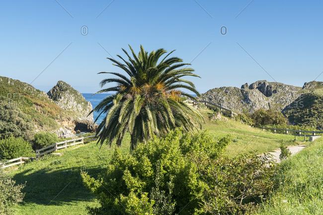 Spain, north coast, Cantabria, coastal landscape, Playa de Berellin, palm tree
