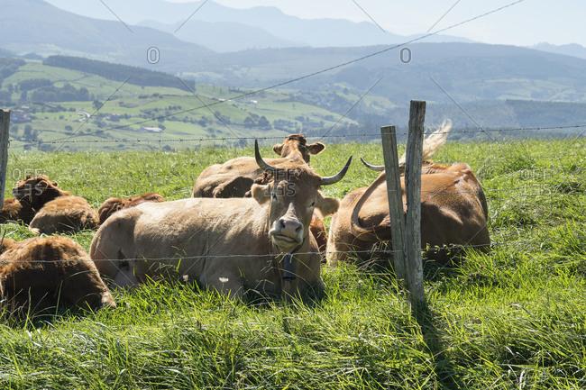 Spain, north coast, Cantabria, landscape, grazing cows