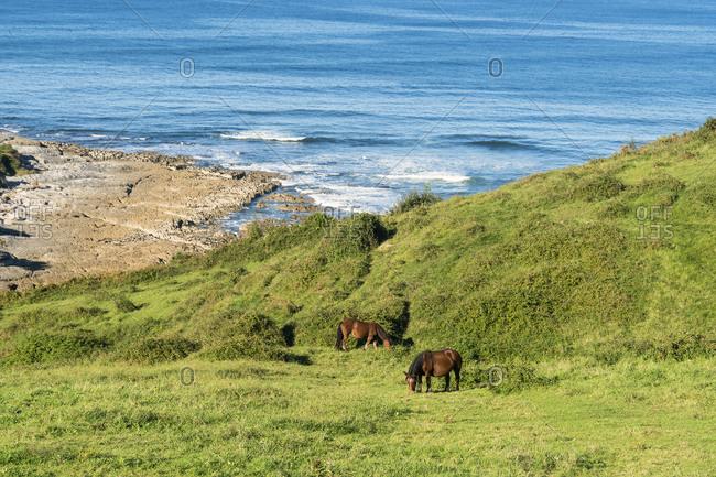 Spain, north coast, Cantabria, San Vicente de la Barquera, coast, Playa de Linera, grazing horses