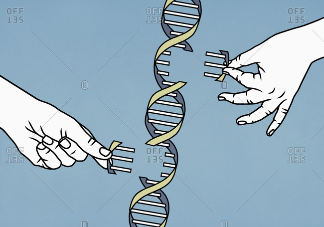 Illustration of hands dismantling double helix