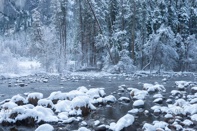The Merced River right after a snow storm, Yosemite National Park