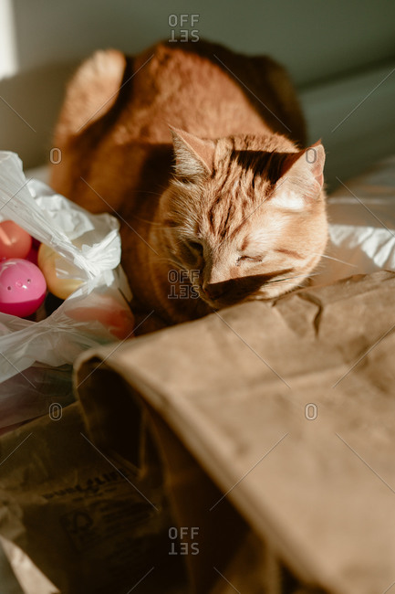 Orange cat sitting by a bag of Easter eggs
