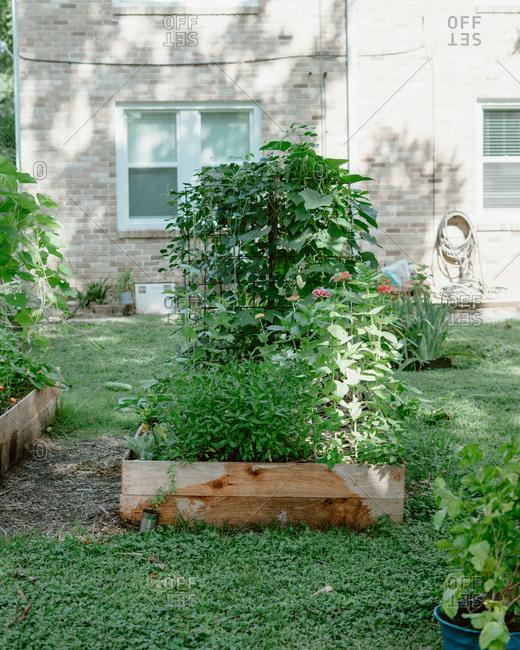 Backyard raised lush garden bed