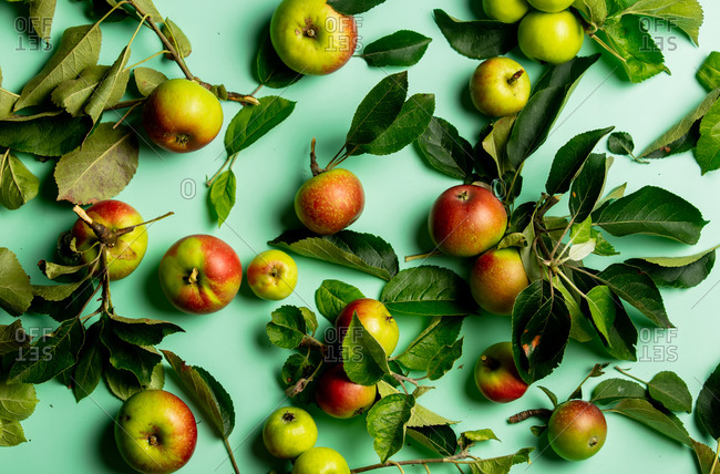 Organic green apples on a table, above view
