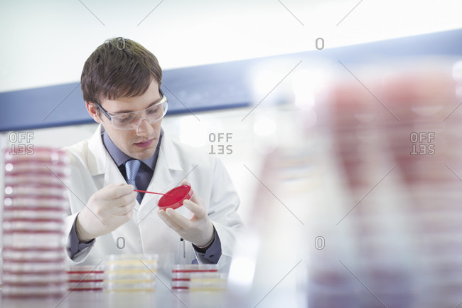 Male scientist researcher wearing safety glasses at workstation with petri dishes in research laboratory.