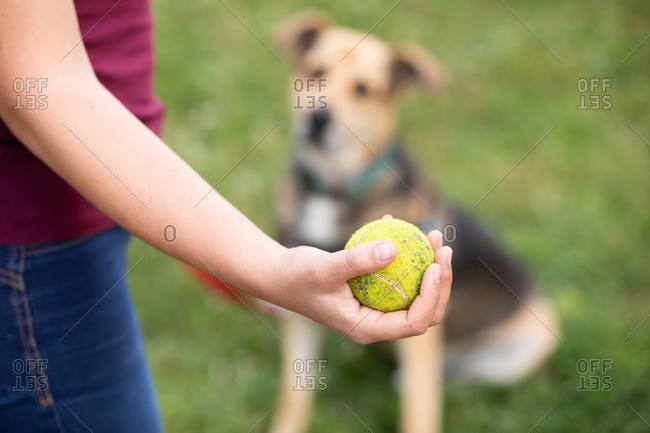 Close up of woman holding tennis ball and an alert dog sitting on lawn, waiting for her to throw it.